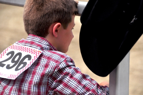 A young boy watching a horse competition