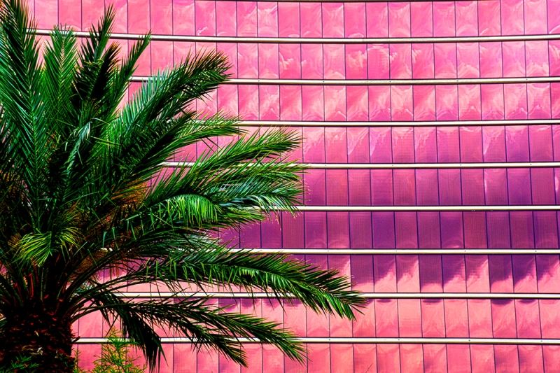Hotel windows and palm tree at Red Rock Casino in Summerlin
